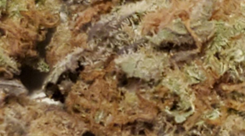harlequin gdp 1 to 1 from trulieve strain review by strain_games 2