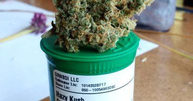 hazy kush by green bodhi strain review by pdxstoneman