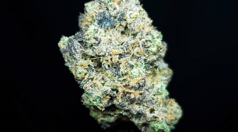 honey flower by a golden state strain review by thefirescale 2