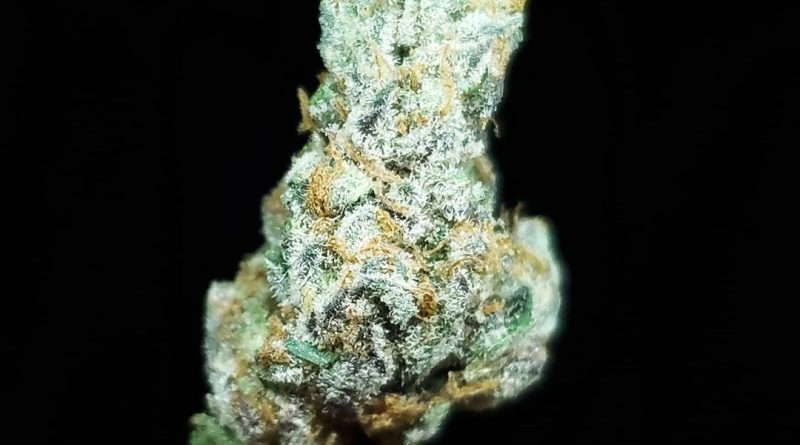 sour apple killer by jungle boys strain review by thefirescale 2