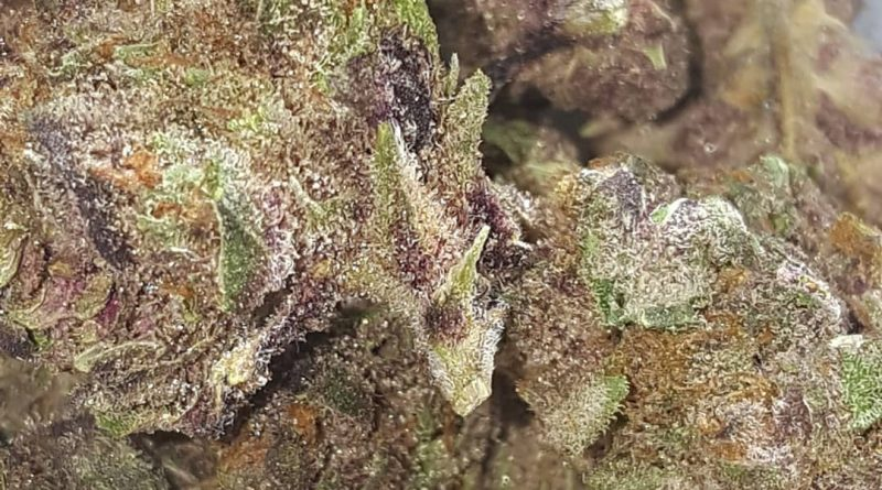 strawberry switchblade from trulieve strain review by strain_games 2