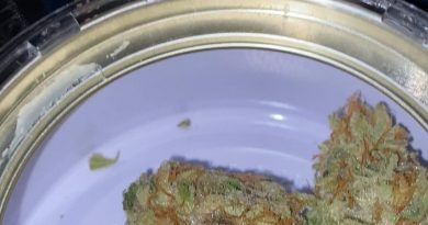 t.k.o. by west coast cure strain review by trunorcal420