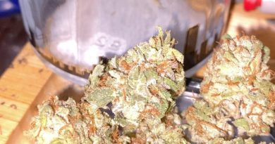 tri-fi by grizzly peak strain review by trunorcal420