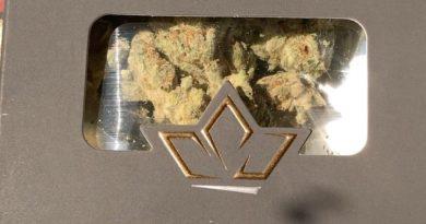 white rhino by cru cannabis strain review by sjweedreview