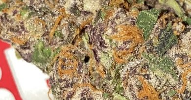 black cherry gelato by backpack boyz strain review by sjweedreview