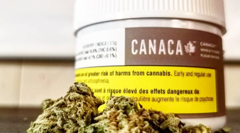 blueberry by canaca strain review by cannasteph