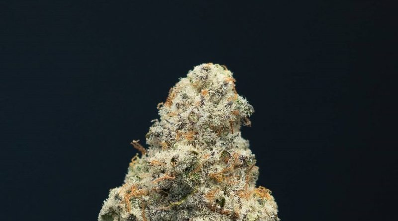 blueberry mac by maven genetics strain review by thefirescale 2