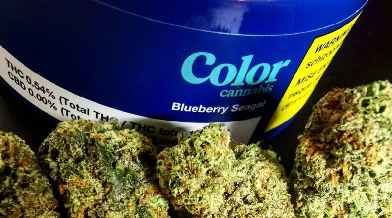 blueberry seagal by color cannabis strain review by cannasteph