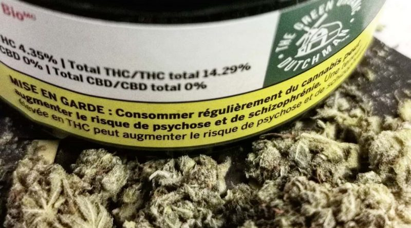 chocolope by the green organic dutchman strain review by cannasteph