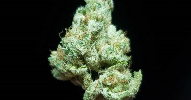 cookies n cream by jungle boyz strain review by thefirescale 2