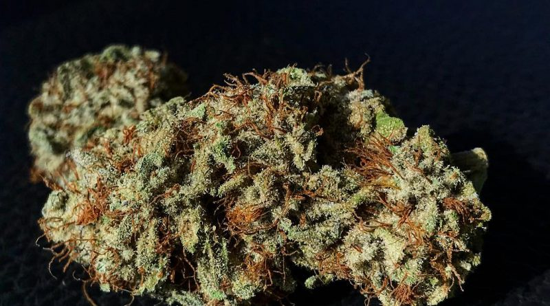 durango og #6 by cannapy builders strain review by diesel.dino