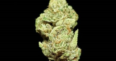 gelonade by connected california strain review by thefirescale 2