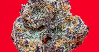 grape pie by cam strain review by thefirescale 2