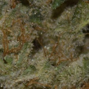 lemon cane by alien labs strain review by bigwhiteash 2