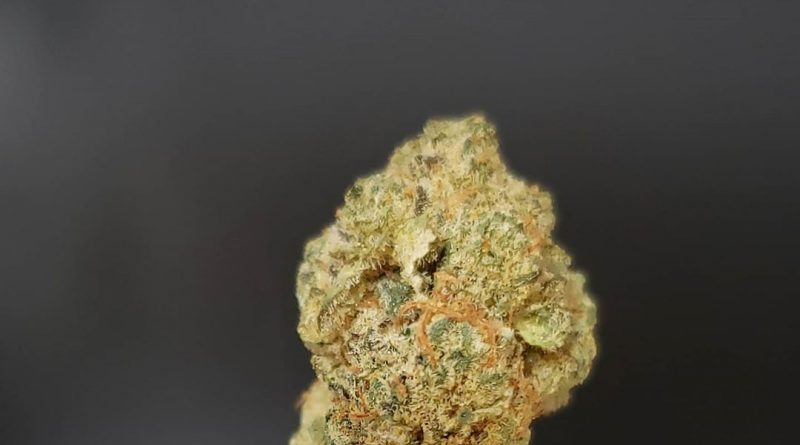 lucky #7 by 3brosgrow strain review by thefirescale 2