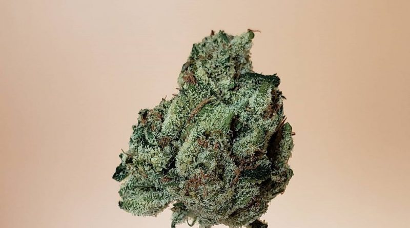 mike larry by jungle boys strain review by thefirescale 3