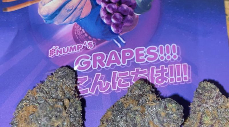 nump's grapes by lyfted farms strain review by trunorcal420 4