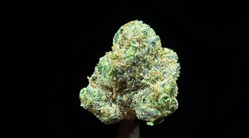 ooh la la by the real lemonnade strain review by thefirescale 3