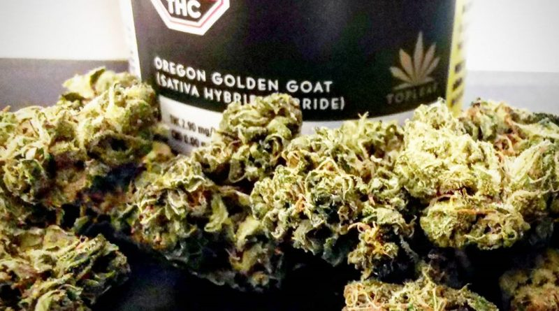 oregon golden goat by top leaf strain review by cannasteph