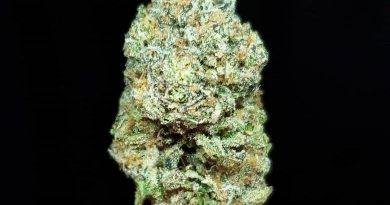sherbacio by alien labs strain review by thefirescale 2