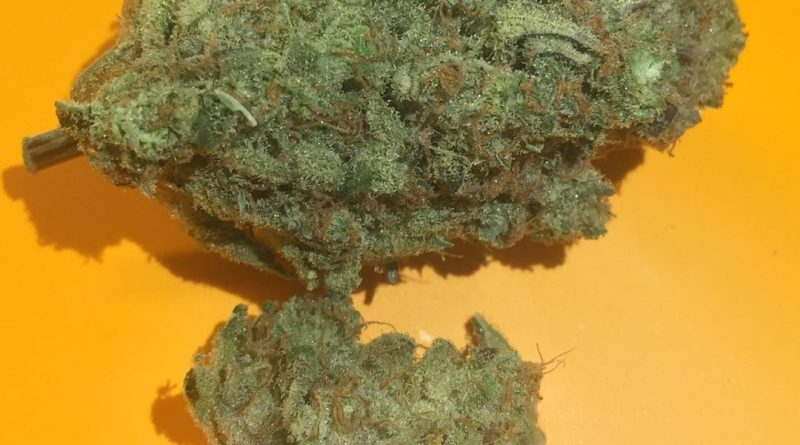 skunk superhero by ascend strain review by fullspectrumconnoisseur