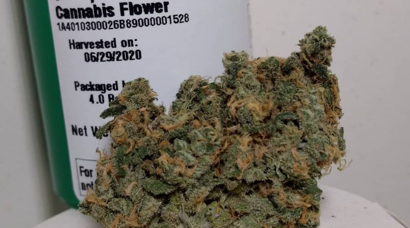 snoop's dream by high winds farm strain review by pdxstoneman 2