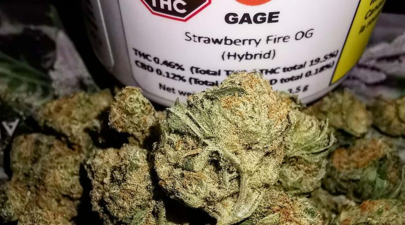 strawberry fire og by gage cannabis canada strain review by cannasteph