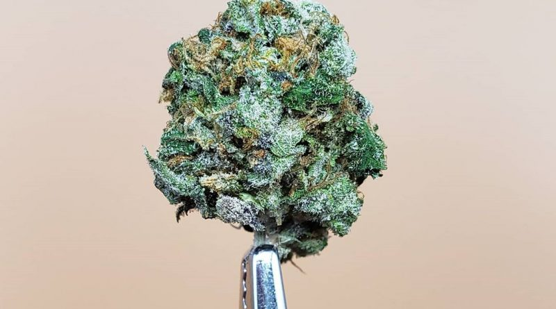 sunset mac by l.a. made strain review by thefirescale 3
