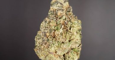 tamarindoz by flower child farms strain review by thefirescale 3