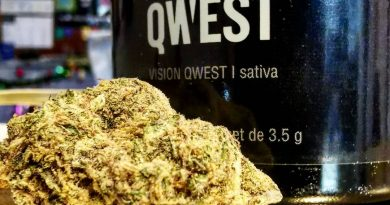 vision qwest by qwest strain review by cannasteph