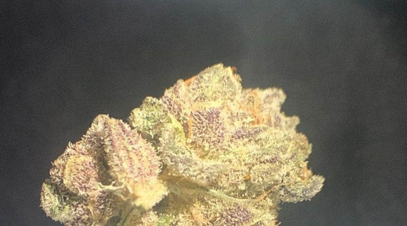white buffalo by truflower strain review by shanchyrls