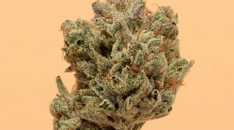 white walker og by cannabiotix strain review by thefirescale 2