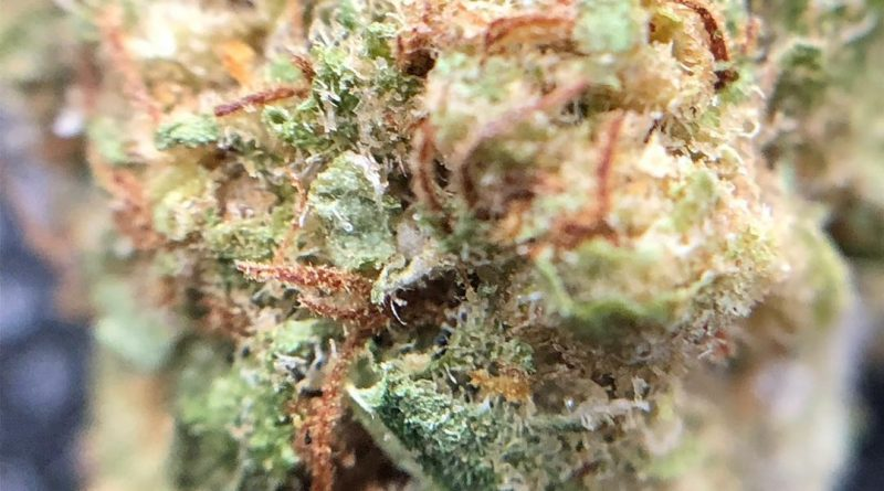 acdc by muv strain review by shanchyrls