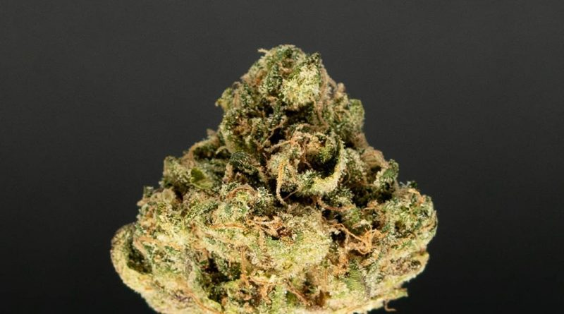 apple crisp by balanced los angeles strain review by thefirescale 3