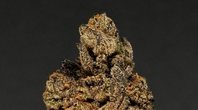 biscotti by tradecraft farms strain review by thefirescale 2