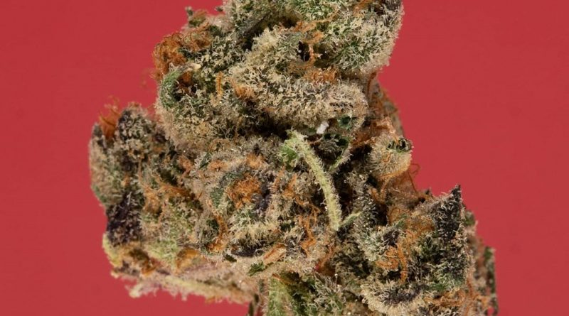 cherry fritter by fresh baked strain review by thefirescale 2