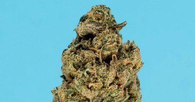 crescendo by thc design strain review by thefirescale 2