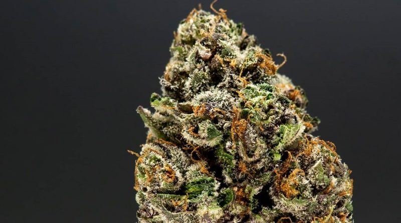 dosi killer by jungle boys strain review by thefirescale