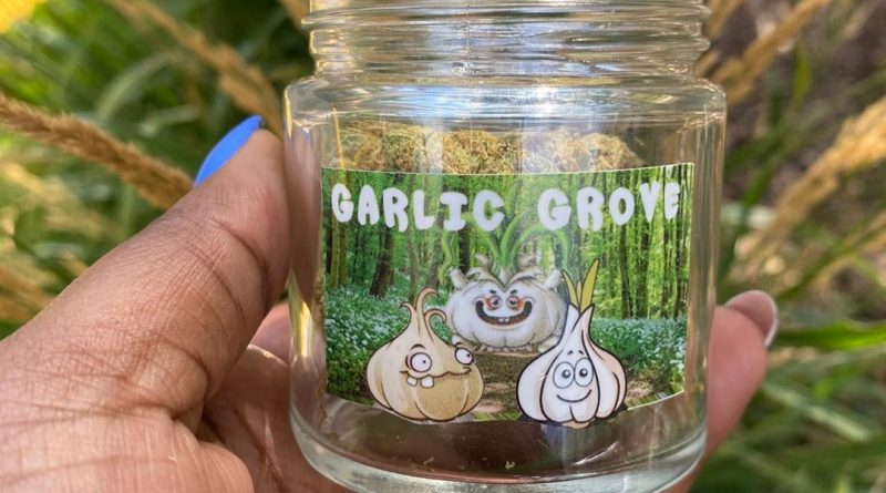 garlic grove by compound genetics strain review by upinsmokesession