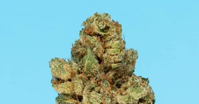 ice cream sundae by northern emeralds strain review by thefirescale