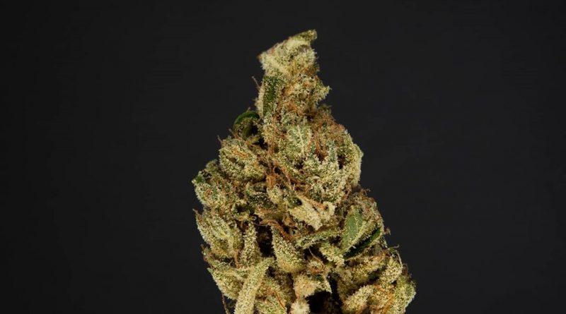 l'orange by cannabiotix strain review by thefirescale 2