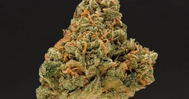 nigerian haze by source cannabis strain review by thefirescale