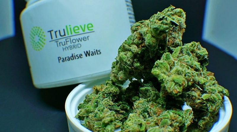 paradise waits by truflower strain review by shanchyrls