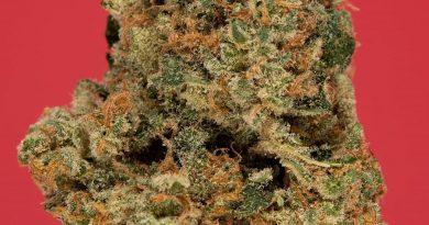 strawbinati by 3c farms strain review by thefirescale 2