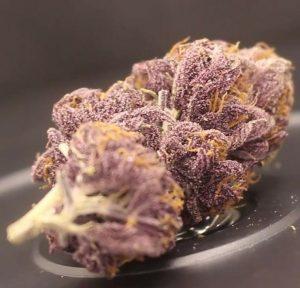 blueberry muffin by yerba cannagar strain review by cannasaurus_rex_reviews 2