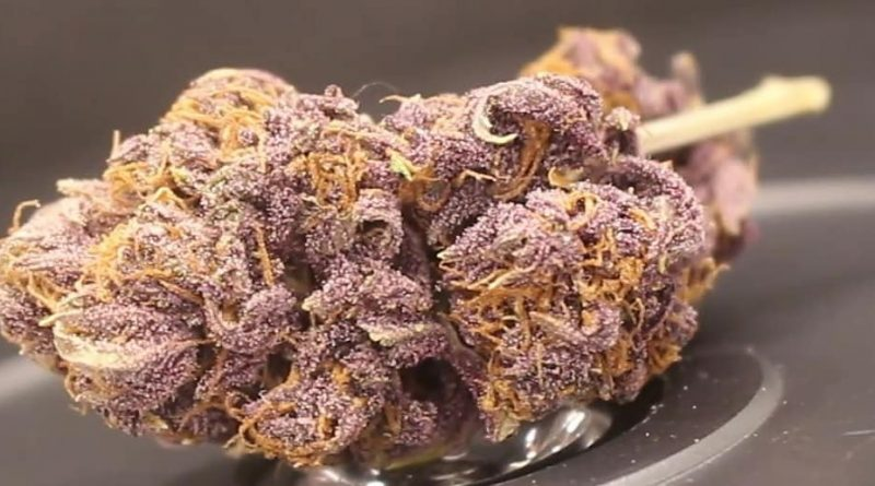 blueberry muffin by yerba cannagar strain review by cannasaurus_rex_reviews