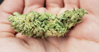 ed rosenthal's super bud ersb by sensi seeds strain review by _scarletts_strains_