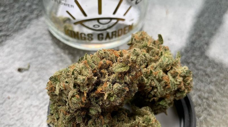 jack by kings garden strain review by christianlovescannabis