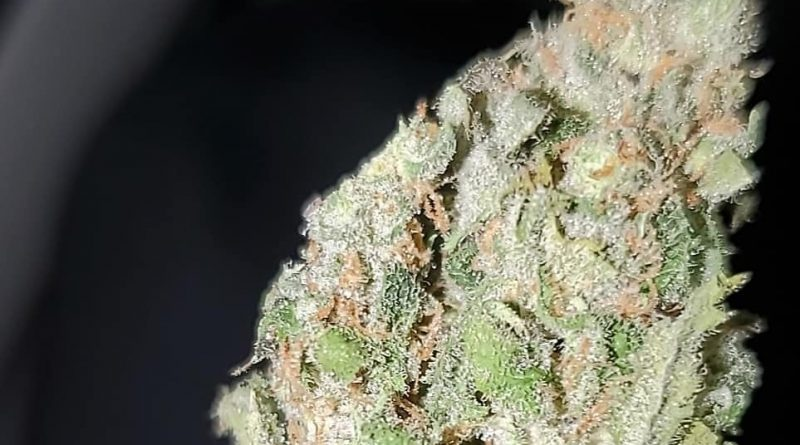 mega power plant by spliff seeds strain review by _scarletts_strains_