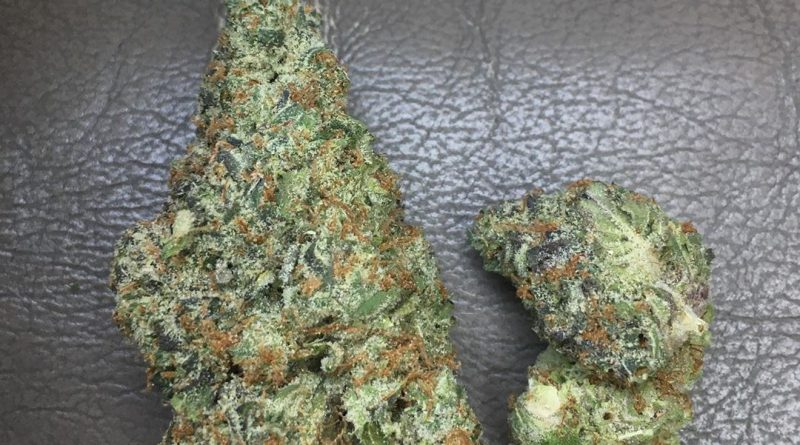 mo guava by fiore genetics strain review by xoticgasreviews